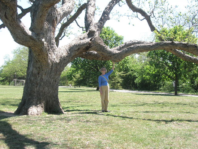 mary under tree